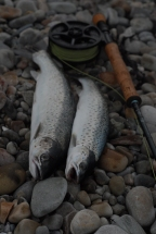 Fly Fish Islay Sea Trout