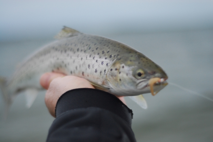 Islay Sea Trout Fishing Fly Fish Islay