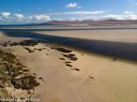 Sea Trout Islay